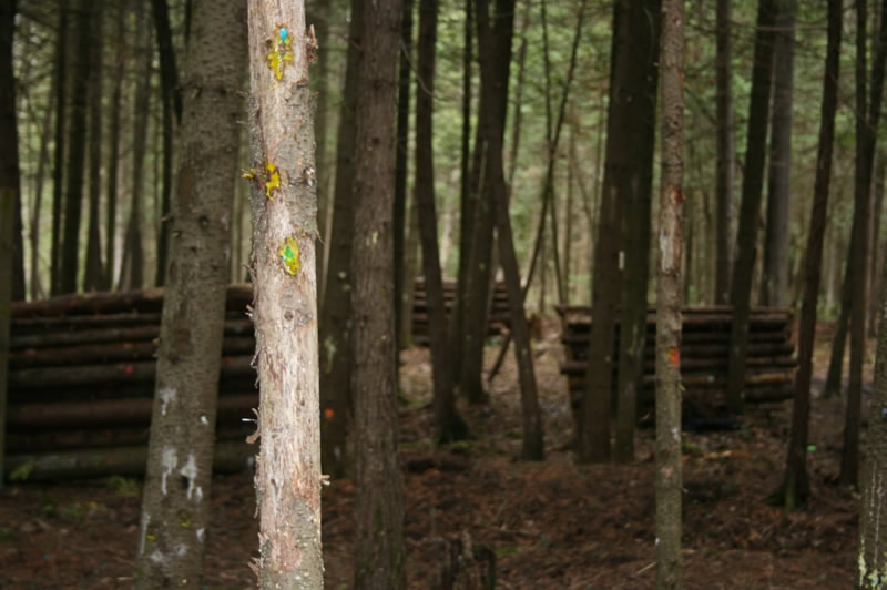 Up Close and Personal field at Commando Action Centre paintball in Ottawa